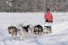 Ochutnávka musheringu - jízda se psím spřežením