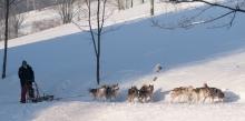 Skupinová jízda se psím spřežením